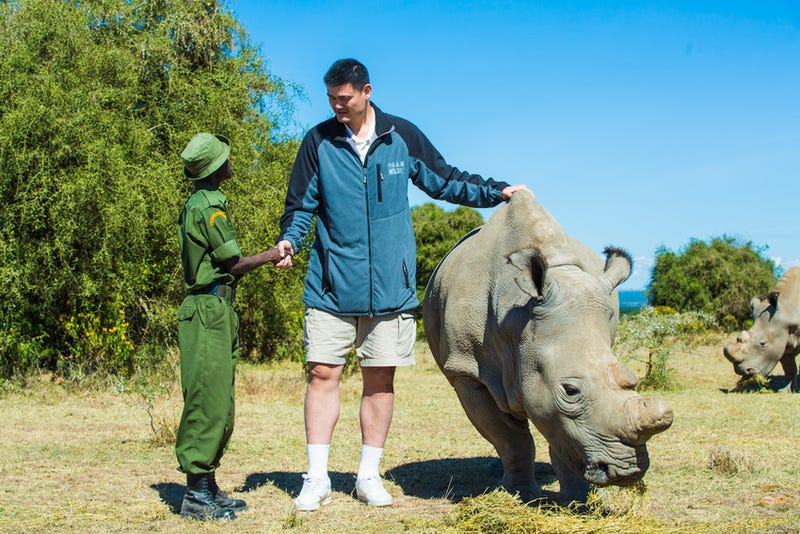 Yao Ming makes everything look tiny, including rhinos.