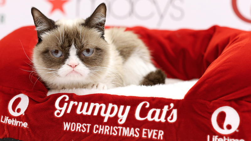 No, Grumpy Cat Is Not Worth $100 Million