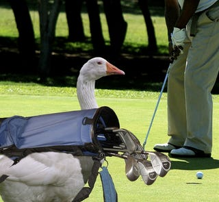 Golf Course Hunting Gives New Meaning To Notching A Birdie