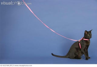 Illustration for article titled So You Want to Leash-Train Your Kitty...