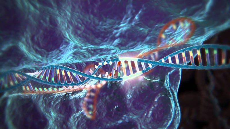 """CRISPR, el """"corta-pega"""" de la ingeniería genética, ha sido aprobado para su uso en humanos"""