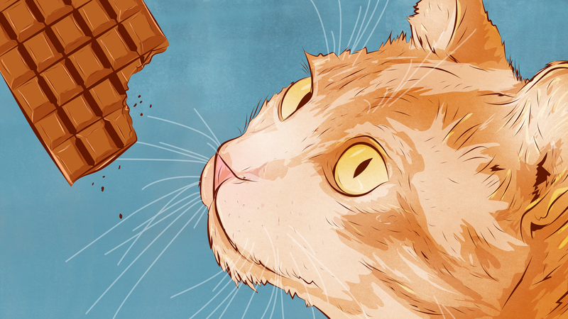 Illustration for article titled The Things That Are Most Dangerous for Cats to Eat, and Why