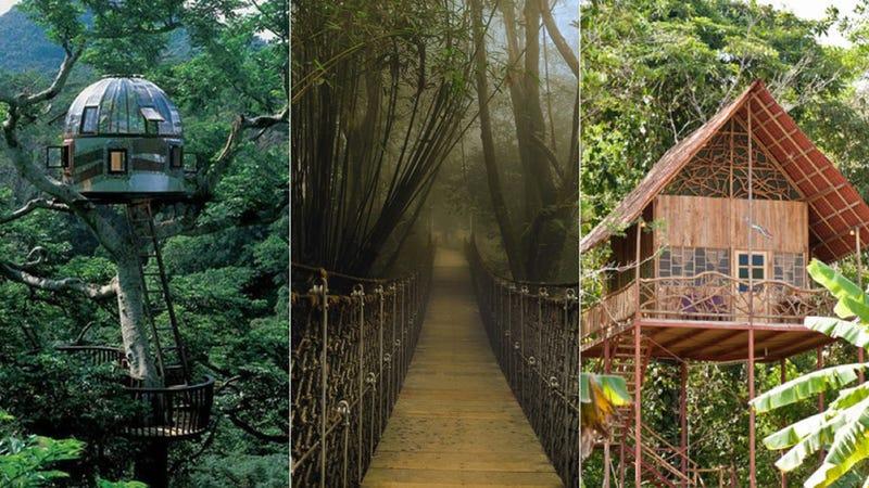 13 Ingenious Treehouses That Go Out on a Limb on tree house boat design, tree shaped bookshelf, japanese garden bridge design, tree fort rope bridge,