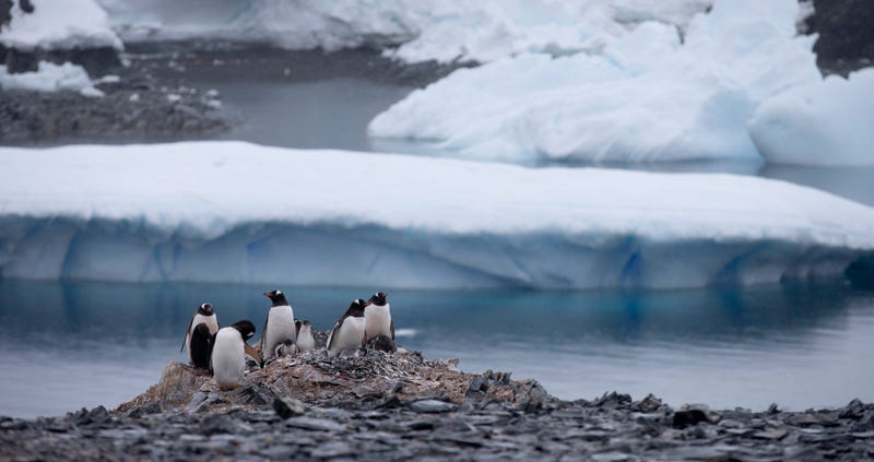 Antártida. AP
