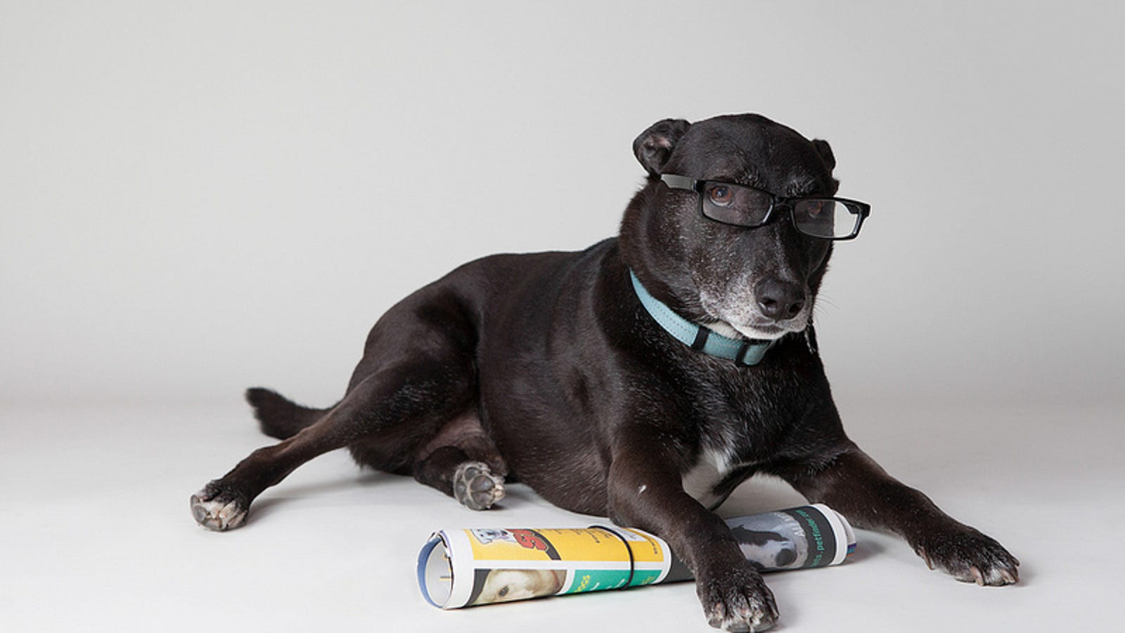 Study Decides Who Is Smarter – Dogs or Cats
