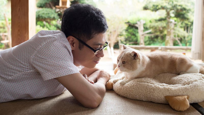 Illustration for article titled Cat Collecting Game Neko Atsume Gets A Live-Action Movie
