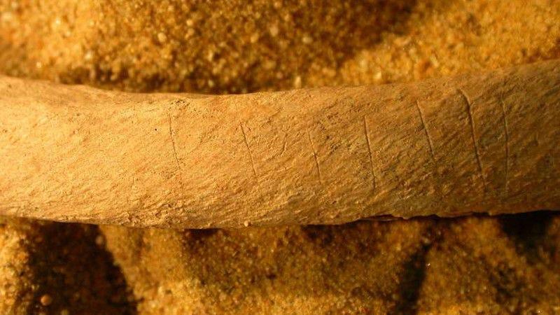 Marcas de cuchillo en una costilla encontrada en Wharram Percy. Foto: Historic England)
