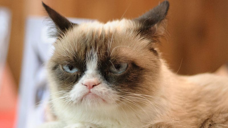 Illustration for article titled World Rejoices As Grumpy Cat And Her Shitty Attitude Dead Forever