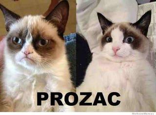Illustration for article titled Prozac is a goddamned wonder drug