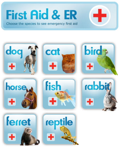 Illustration for article titled PetMD Supplies Pet Health Information in a Pinch