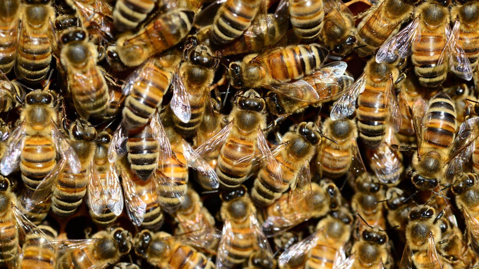 Call a Beekeeper, Not an Exterminator