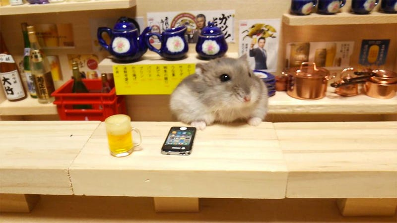 Illustration for article titled Hamster Bartenders Are All the Rage in Japan (Where Else)