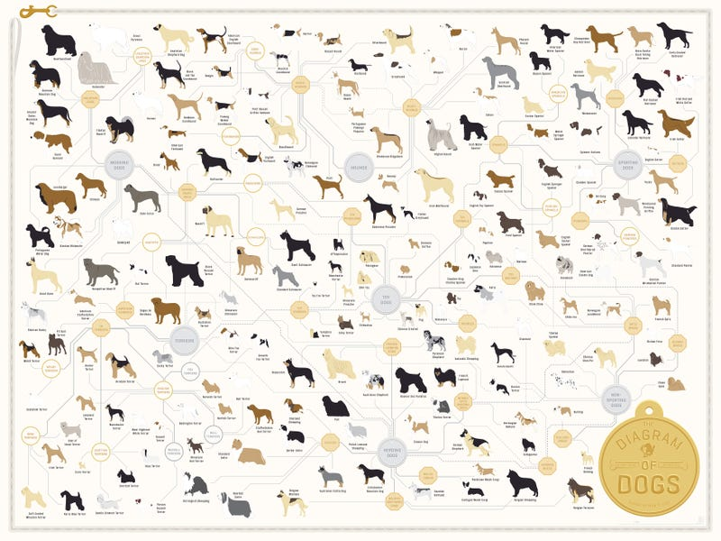 New From Pop Chart Lab The Diagrams Of Dogs Poster Clifies 181 Dog Breeds By Types And Various Sub All Your Old Favorites Are On There