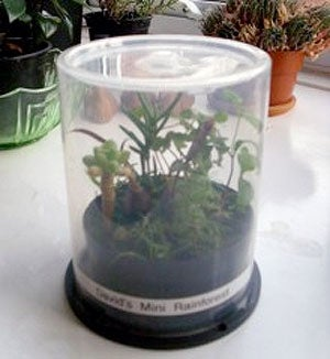 Start a Plant in a CD Spindle Case