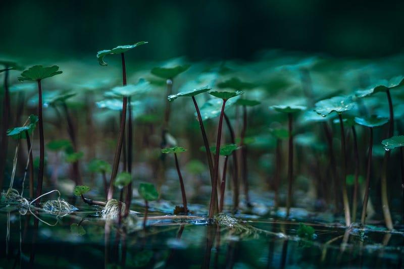 El virus ha aparecido en el agua de un estanque en Connecticut. Foto: Fancycrave