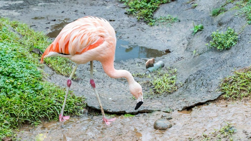 Is Your Flamingo Sick Enough To Make A Movie About?