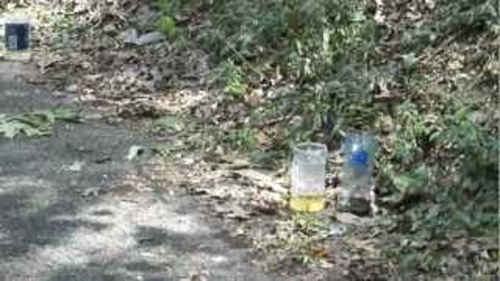 Build This Yellow Jacket Trap for Worry-Free Outdoor Soda