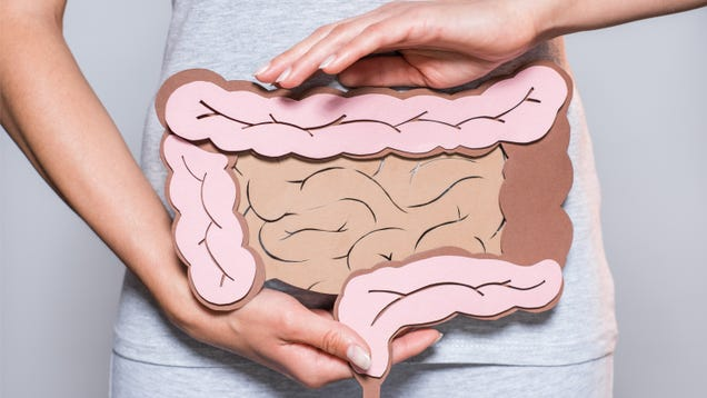 Why You Shouldn t Worry About Your  Gut Health