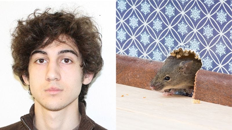 Illustration for article titled Debt Paid: Authorities Are Releasing Dzhokhar Tsarnaev From Prison After He Caught A Pesky Mouse That Had Been Vexing The Warden
