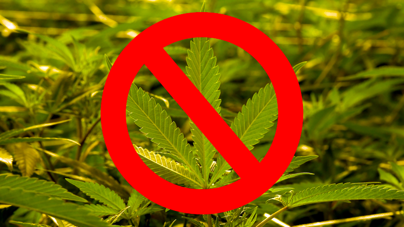 Illustration for article titled Toronto Airport Says Cannabis Trash Cans Are Not 'Free Weed' Bins