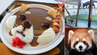 Illustration for article titled Red Panda Curry Is Best Served with Real Pandas