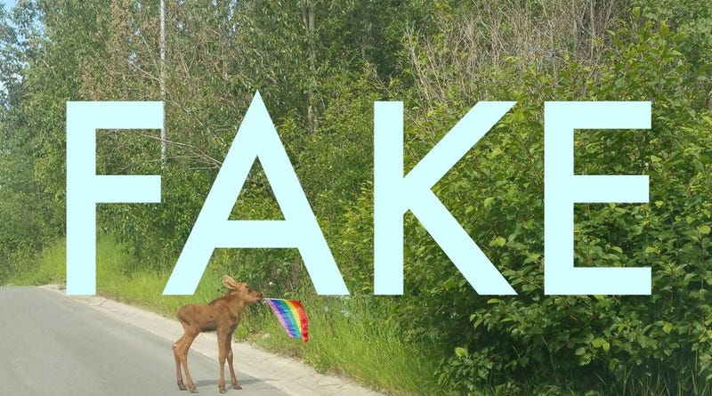 Illustration for article titled That Photo of a Baby Moose With a Pride Flag Is Fake
