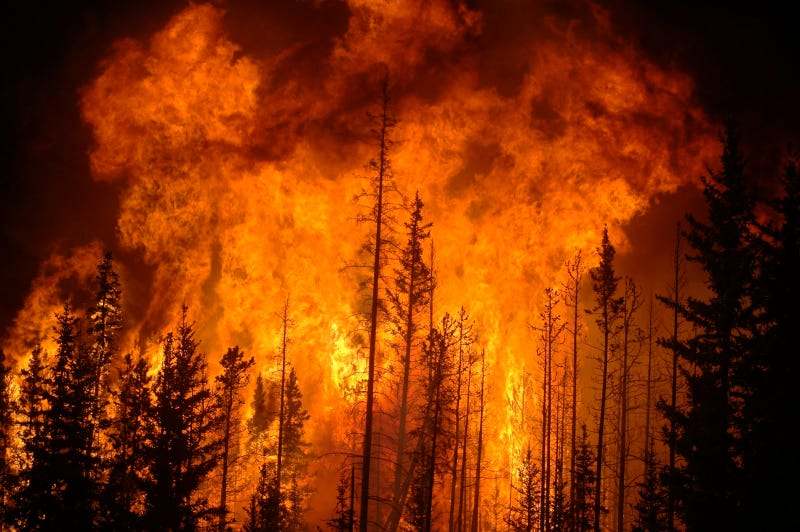 Illustration for article titled Massive Forest Fires Could Be Cooling the Earth