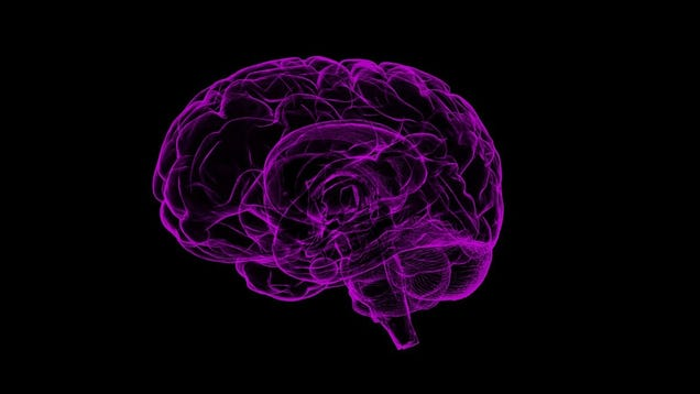 These Scientists Want to Redefine Alzheimer s as a  Double-Prion  Disease
