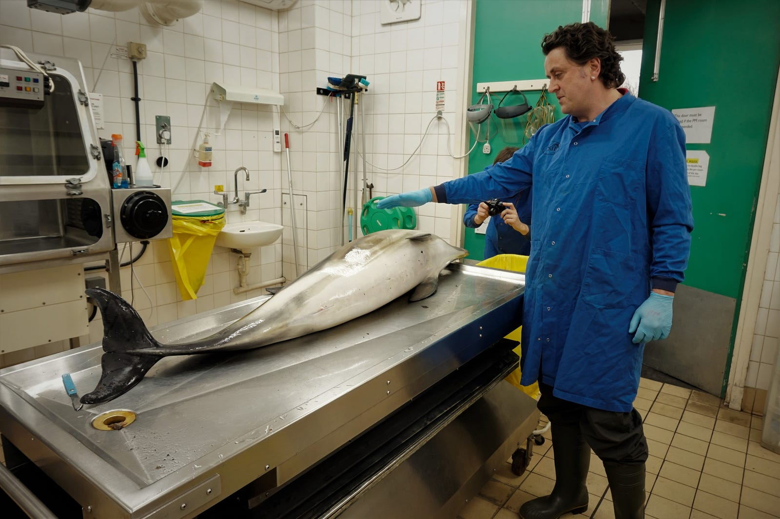 Exploding Whales, Poisoned Porpoises: The Gruesome World Of Cetacean Autopsies