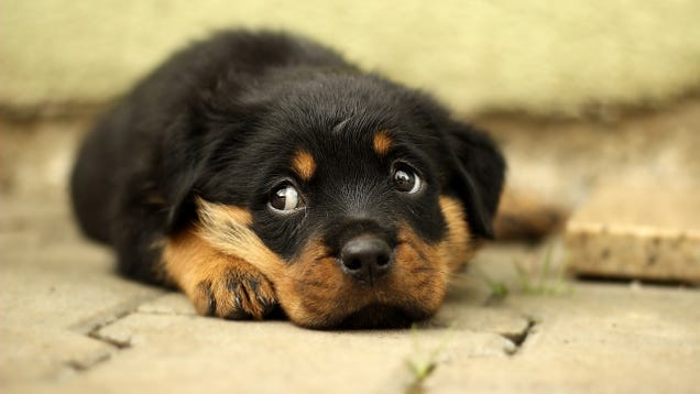 Pet Store Puppies Are Spreading a Diarrhea-Causing Superbug to Humans