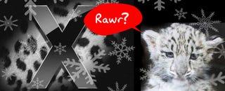 Illustration for article titled Rumor: Snow Leopard Hitting Shelves Next Friday, August 28