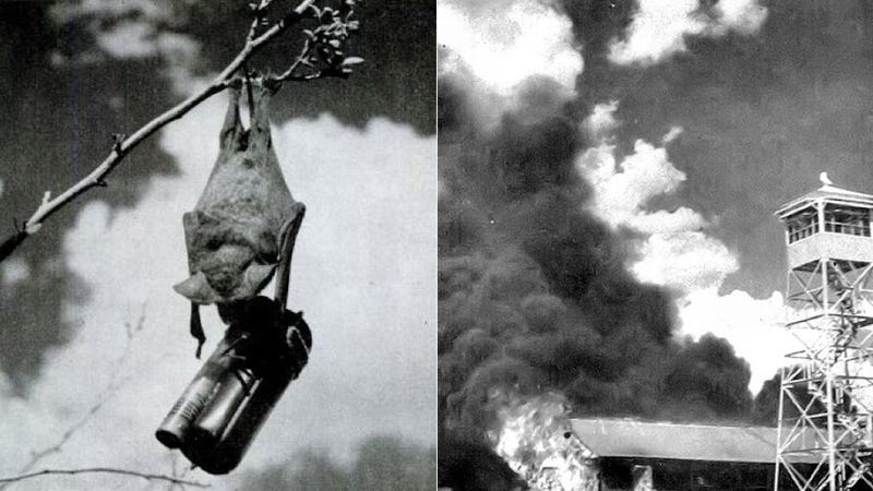 Illustration for article titled The US Military's Disastrous Plan to Use Napalm-Strapped Bats in WWII