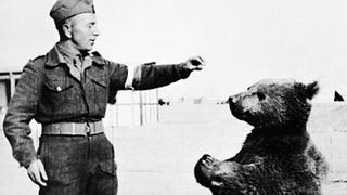Illustration for article titled This Bear Was an Official Member of Poland's WWII Army