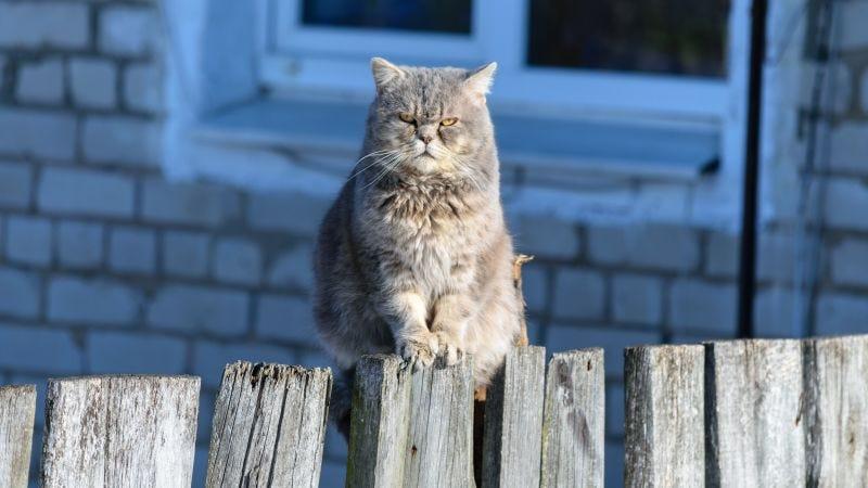 Illustration for article titled Cómo lograr que tu gato te haga caso cuando lo llames