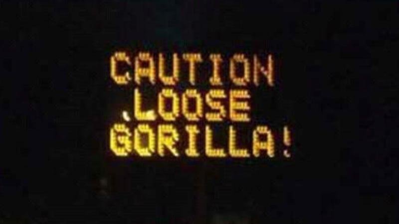 Illustration for article titled Is A Gorilla Loose In Texas?