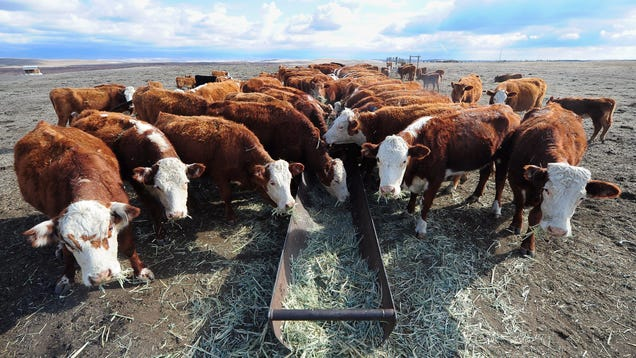Ranchers and Environmentalists Agree: Trump's New Water Rule Sucks