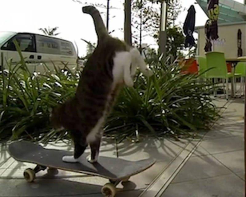 Illustration for article titled #TeamCat! Didga the skateboarding cat