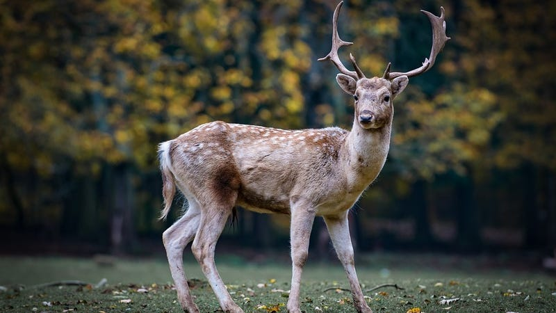 Prions are one of the scariest ways to die, but we might be safe from catching one particular prion disease found in deer, a new study says.