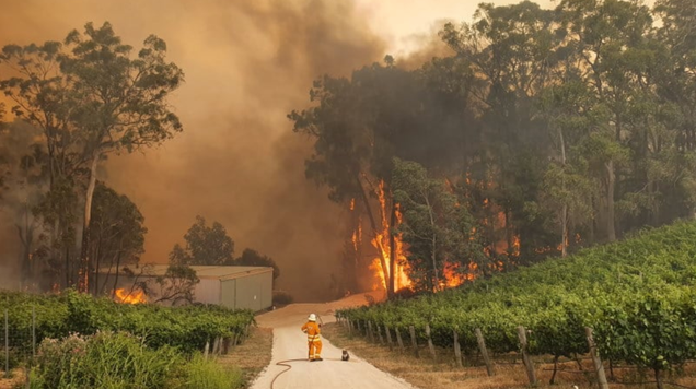 Photo of Koala and Firefighter Surrounded by Flames Perfectly Captures the Climate Emergency