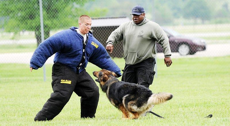 Illustration for article titled Un niño de 9 años lleva recaudados miles de dólares para equipar a los perros policía con chalecos antibalas