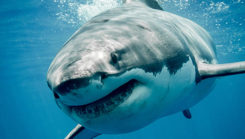 report sharks to only kill 10 people this year but one of them will