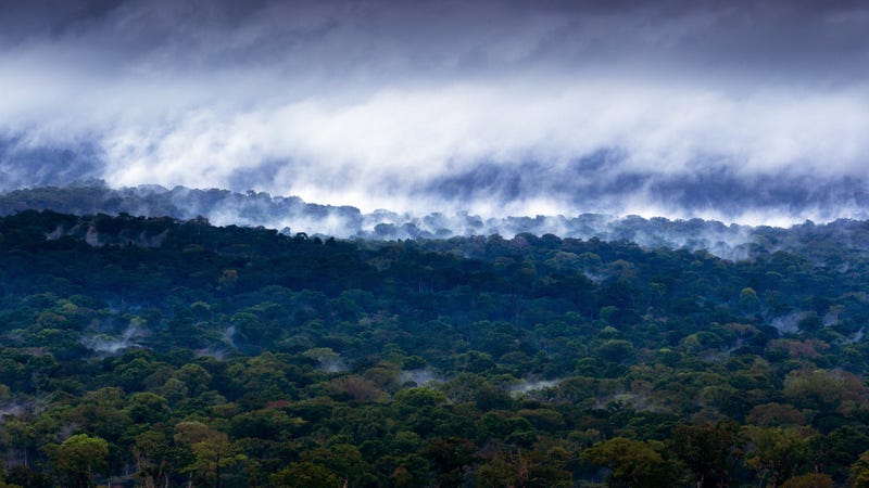 The Congo Basin in Cameroon