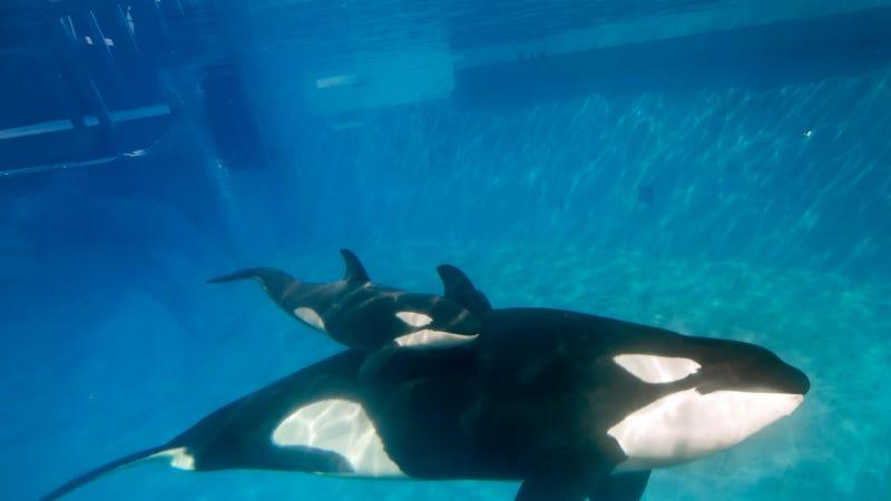 Mike Aguilera/SeaWorld San Diego via Getty Images