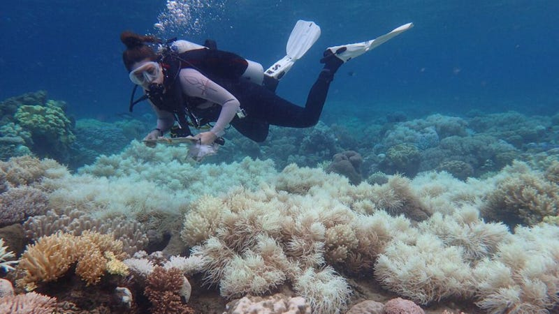 Image:  ARC Centre of Excellence for Coral Reef Studies