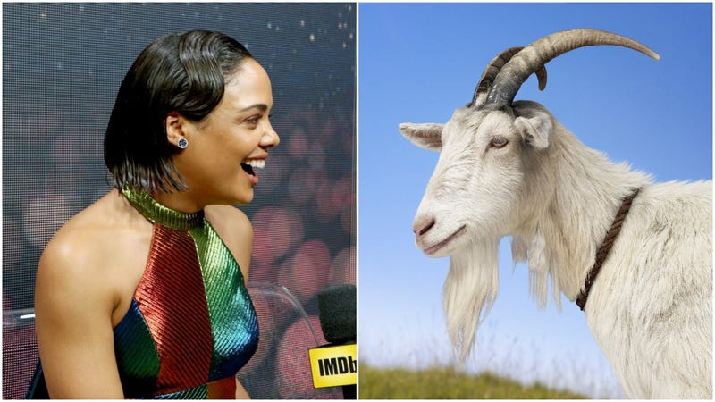 Illustration for article titled Tessa Thompson: Probably not a goat, but surprisingly cool with being compared to one