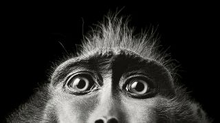 Illustration for article titled Tim Flach's intimate animal portraits reveal nature's human side