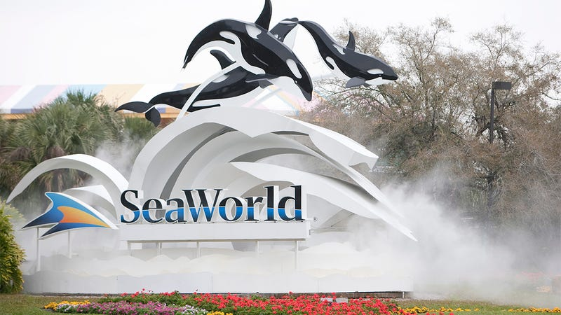 One For The Road: SeaWorld Has Realized People Will Be Mad At It No Matter What It Does So It's Just Going To See How Fat It Can Make A Dolphin Before It Goes Bankrupt