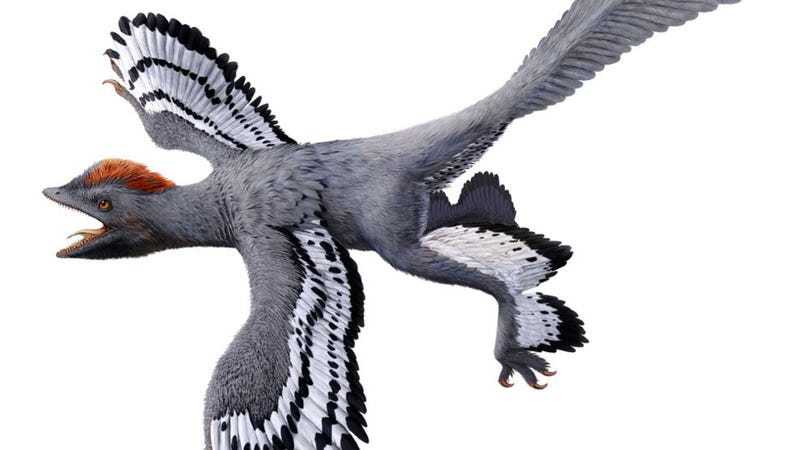 An updated reconstruction of Anchiornis using the new body outline using laser-stimulated fluorescence data. (Image: Julius T. Csotonyi)