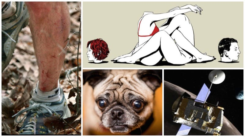 Illustration for article titled Perros de diseño, una carrera terrorífica, cada vez menos sexo. Lo mejor de la semana
