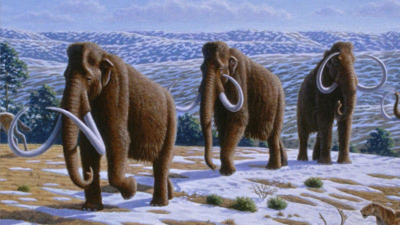 Illustration for article titled Shady scientists head up mission to clone woolly mammoths